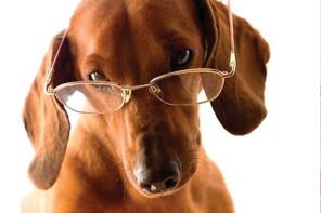 Oftalmologia Veterinária - Como funciona a visão dos cães por Dr Renan Pagliarini