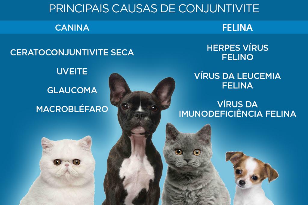 Oftalmologia Veterinária - Renan Pagliarini 1